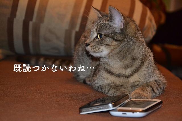 既読がつかない、と不機嫌な猫