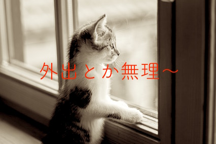 嵐の外を見る猫