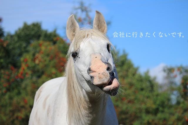 変顔する馬