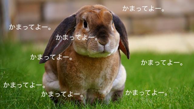 rabbit-1422882_640