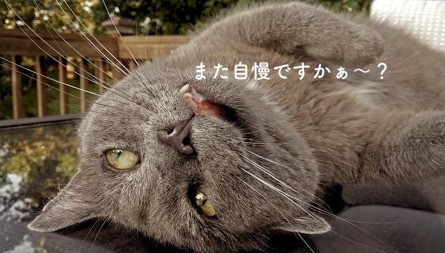cat-1496059_640