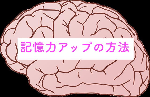 脳みそと記憶力
