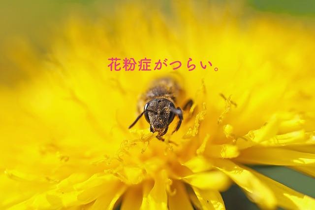 花粉症に悩む蜂