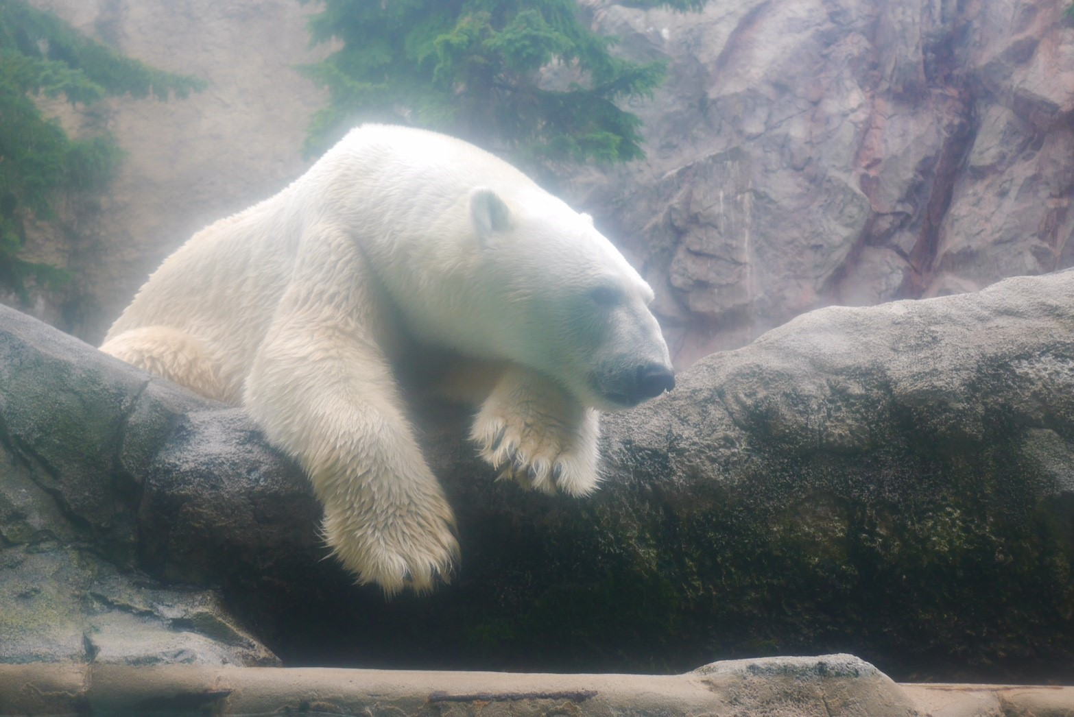 旭山動物園ほっきょくぐま舎
