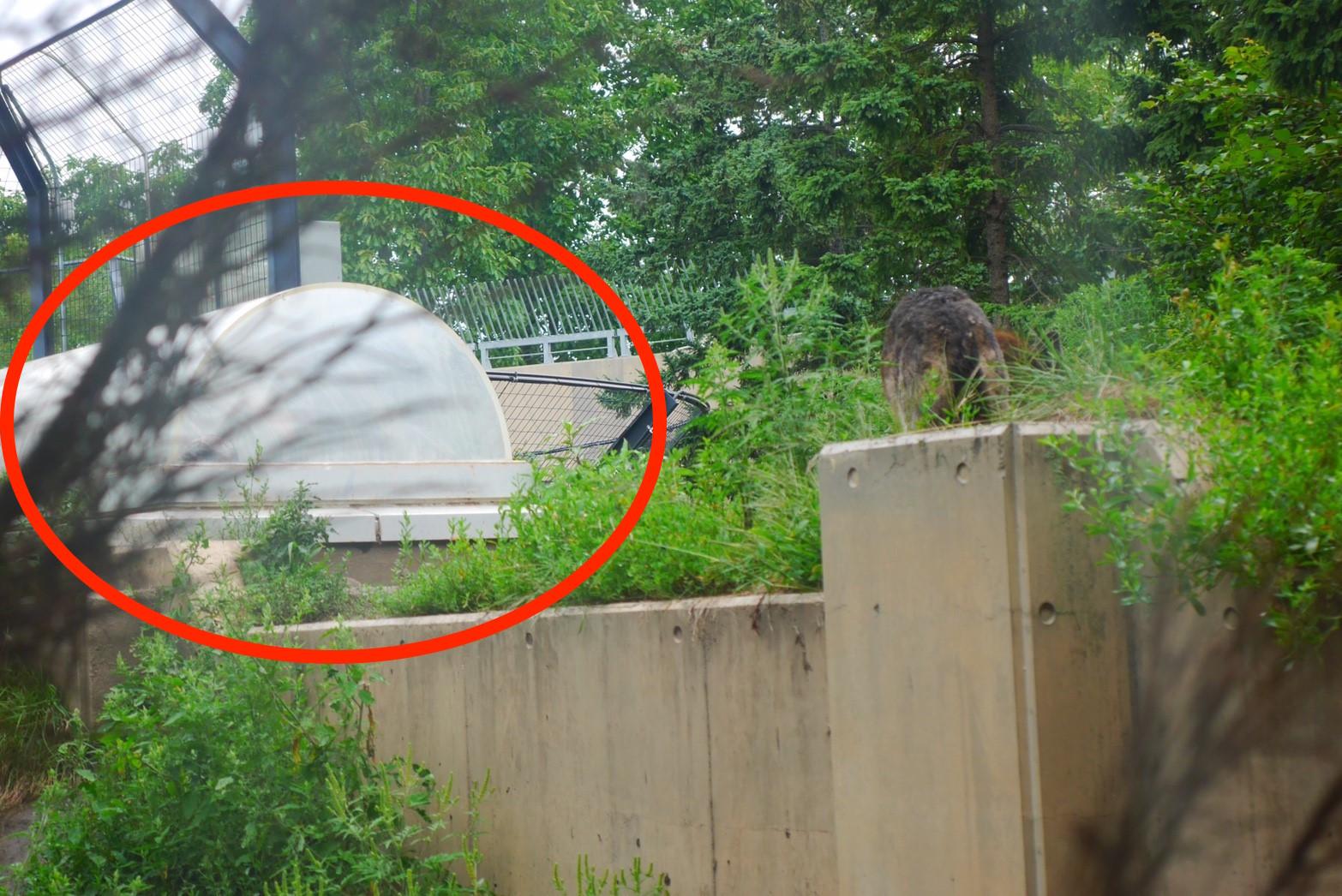 旭山動物園オオカミの森の観察スポット