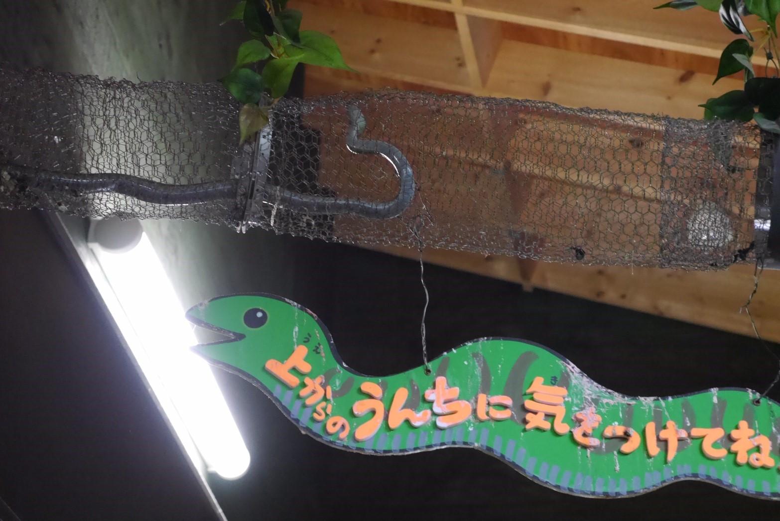 旭山動物園の蛇