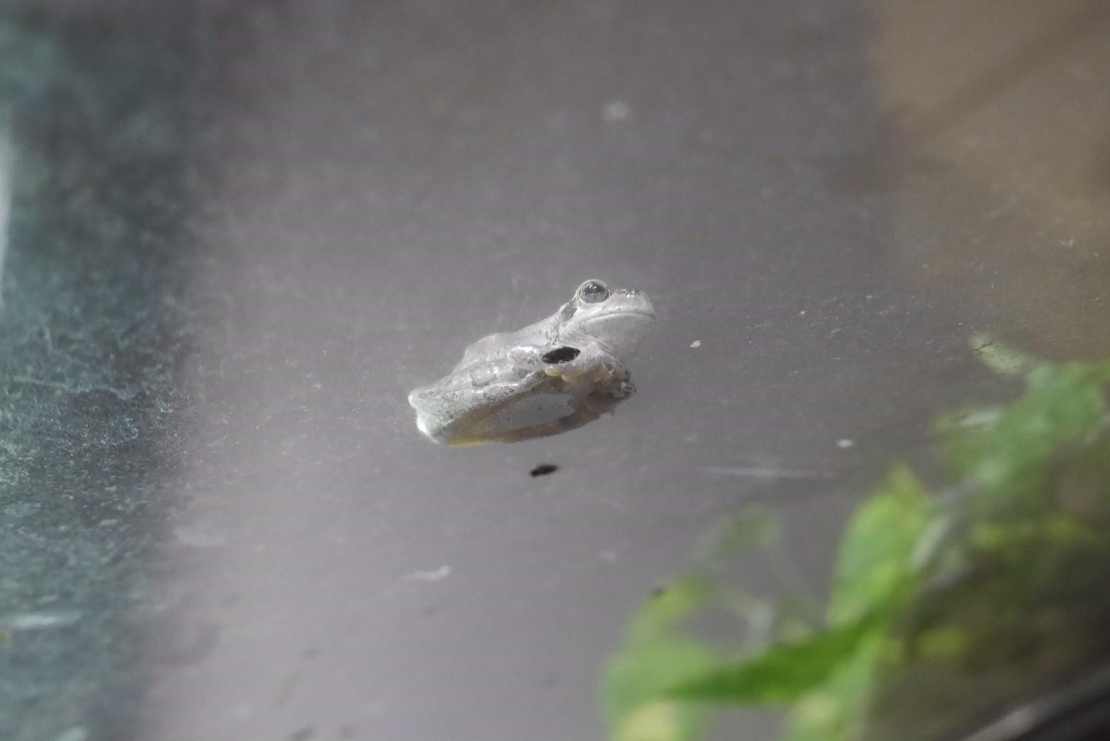 旭山動物園のカエル