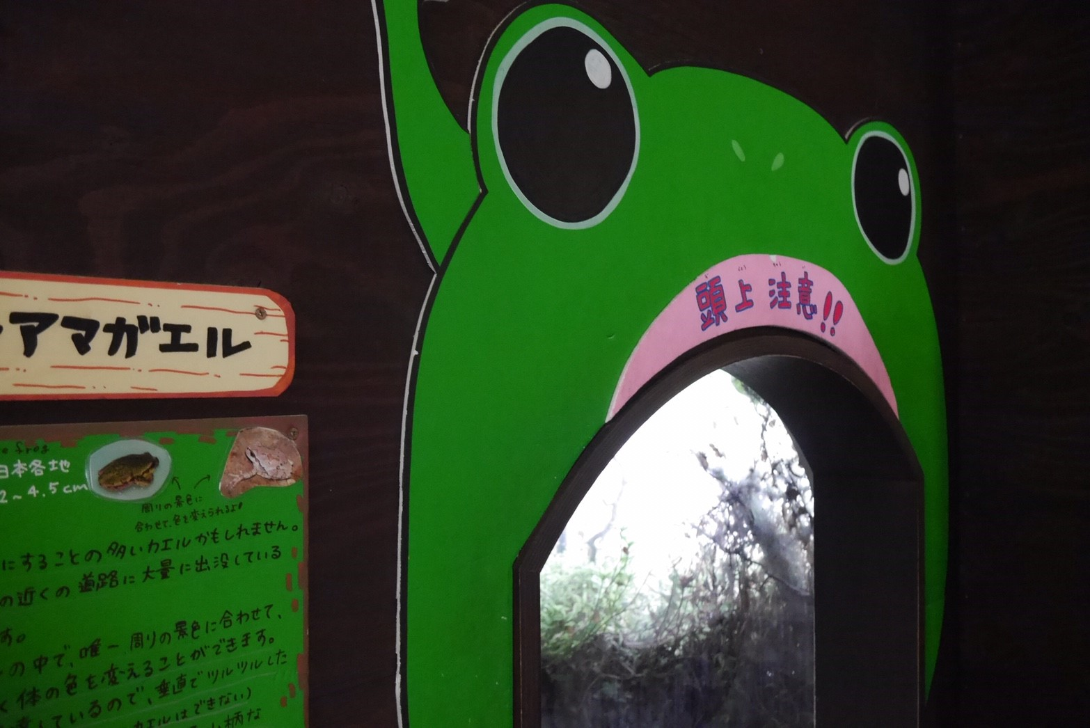 旭山動物園両生類は虫類舎