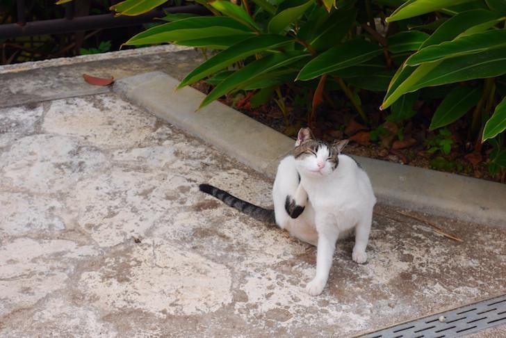首里城の猫