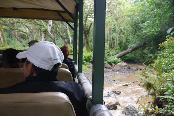 クアロアランチジャングル